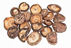 Dried field mushrooms Royalty Free Stock Photos
