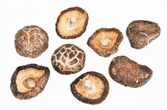 Dried field mushrooms Stock Images