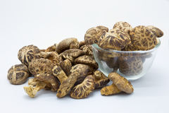 Dried field mushrooms Stock Photo