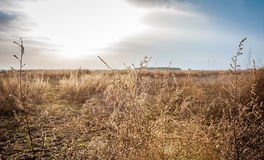Dried field in a sunny spring day. Dried  field filled with weeds and plants in a sunny spring day Stock Photography