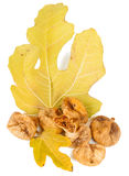 Dried fig fruit Royalty Free Stock Images