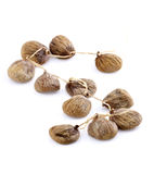 Dried figs Royalty Free Stock Photo