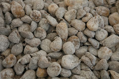 Dried figs Stock Images
