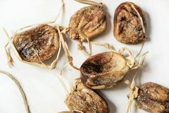 Dried figs on the string; healthful food. Close-up shot stock images