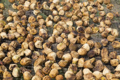Dried figs on the sun Stock Photos