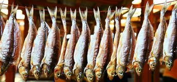 Dried fish Royalty Free Stock Photos