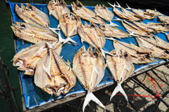 Dried Fish Royalty Free Stock Photography