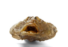 Dried fish Stock Photography