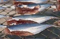 Dried fish. Stock Photo