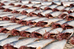 Dried fish. Royalty Free Stock Images