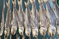 Dried fish. A row of dried little yellow croakers Royalty Free Stock Image