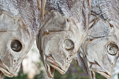 Dried fish. A row of dried yellow croakers Stock Photography
