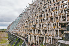 Dried fish. Stock Images