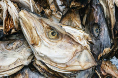 Dried fish. Royalty Free Stock Photography