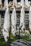 Dried fish. Royalty Free Stock Image