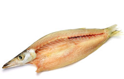 Dried fish of barracuda Stock Images