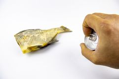 Dried fish and beer can isolated on white background stock photography