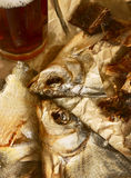Dried fish and beer. Russian tradition of drinking beer Stock Image