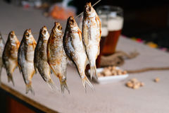 Dried fish and beer Stock Photos