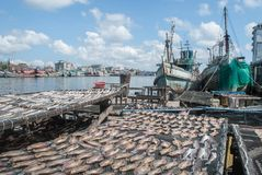 Dried fish at boat port stock image