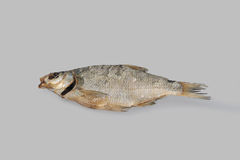 Dried fish bream. Royalty Free Stock Photos