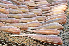 Dried fish on the cast net Royalty Free Stock Photos