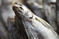 Dried fish close up Royalty Free Stock Photography