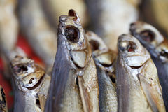 Dried fish close up Stock Photo