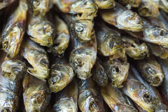Dried fish close-up. Royalty Free Stock Photography