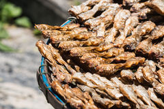 The Dried Fish Stock Image
