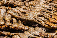 The Dried Fish Royalty Free Stock Images
