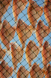 Dried fish. Dry in sunlight to make it keep-able for long time Stock Images