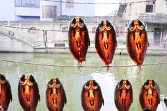 Dried fish drying. In the annual Spring Festival, drying dried fish is a lifestyle of rural residents in Shaoxing City, Zhejiang Province, China, it is mainly Stock Photography