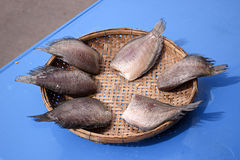 Dried Fish. Fish drying in the sun Royalty Free Stock Photos