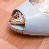 Dried fish within female shoe. Royalty Free Stock Photo