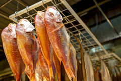 Dried fish Royalty Free Stock Image
