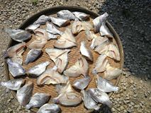 Dried fish by local way in Thailand stock photos