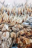 Dried fish. Fresh fish rapidly deteriorates unless some way can be found to preserve it. Drying is a method of food preservation that works by removing water Stock Photos