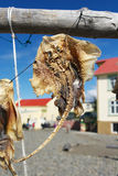 Dried fish hanging in a fishermen village, Hvammstangi, Iceland Stock Images