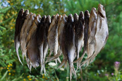 Dried fish hanging on a rope Stock Photos