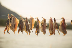 Dried fish hanging Royalty Free Stock Photo