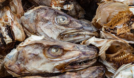 Dried fish heads for export Royalty Free Stock Photos