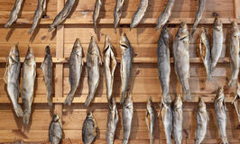 Dried fish. Hung on the grid Royalty Free Stock Images