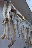 Dried fish on a line Royalty Free Stock Photos