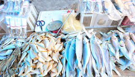 Dried fish market Royalty Free Stock Photos