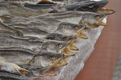 Dried fish at the market. Royalty Free Stock Image