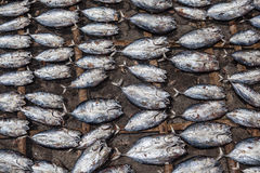 Dried Fish at Market Stock Images
