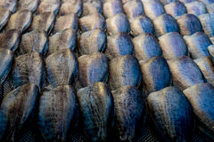 Dried fish in the market Stock Image