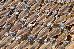 Dried fish in Nazare Stock Photo