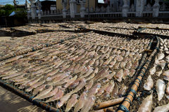 The dried fish Stock Photos